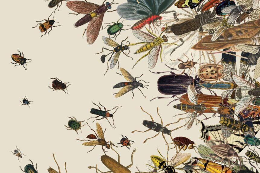 «Тихие песни» насекомых: музыка, которую слышно только летом