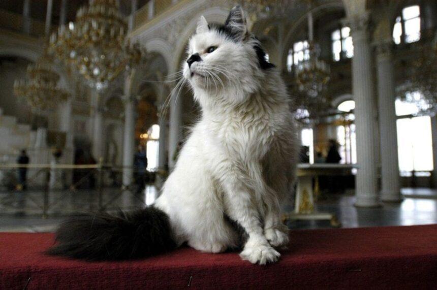 Коты Эрмитажа получат наследство от французского мецената