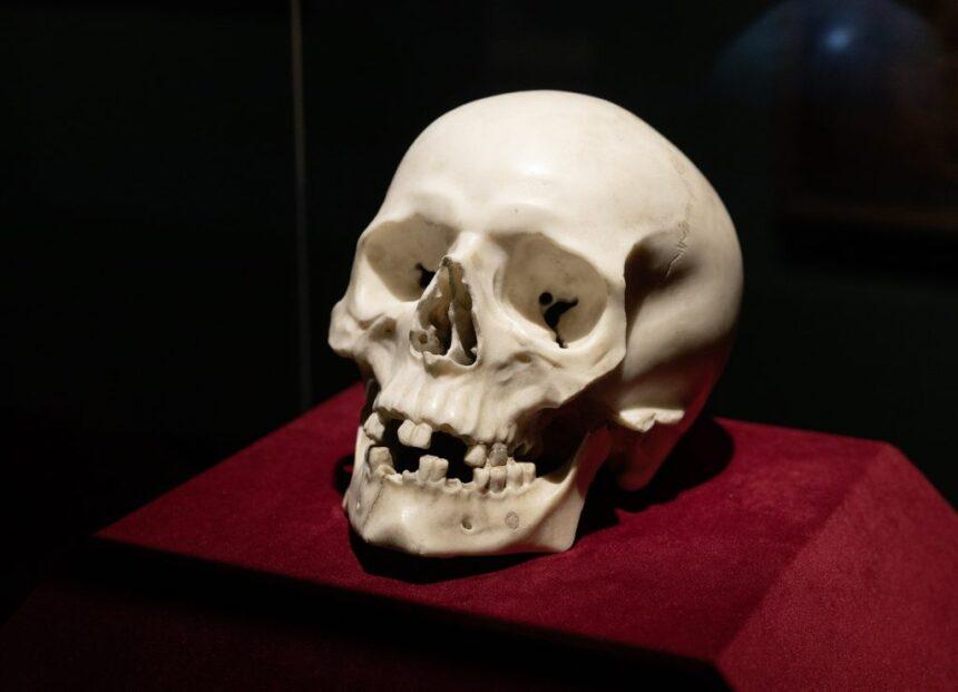Череп изколлекции замка Пильниц оказался работой Бернини